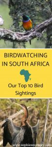 birdwatching in south africa