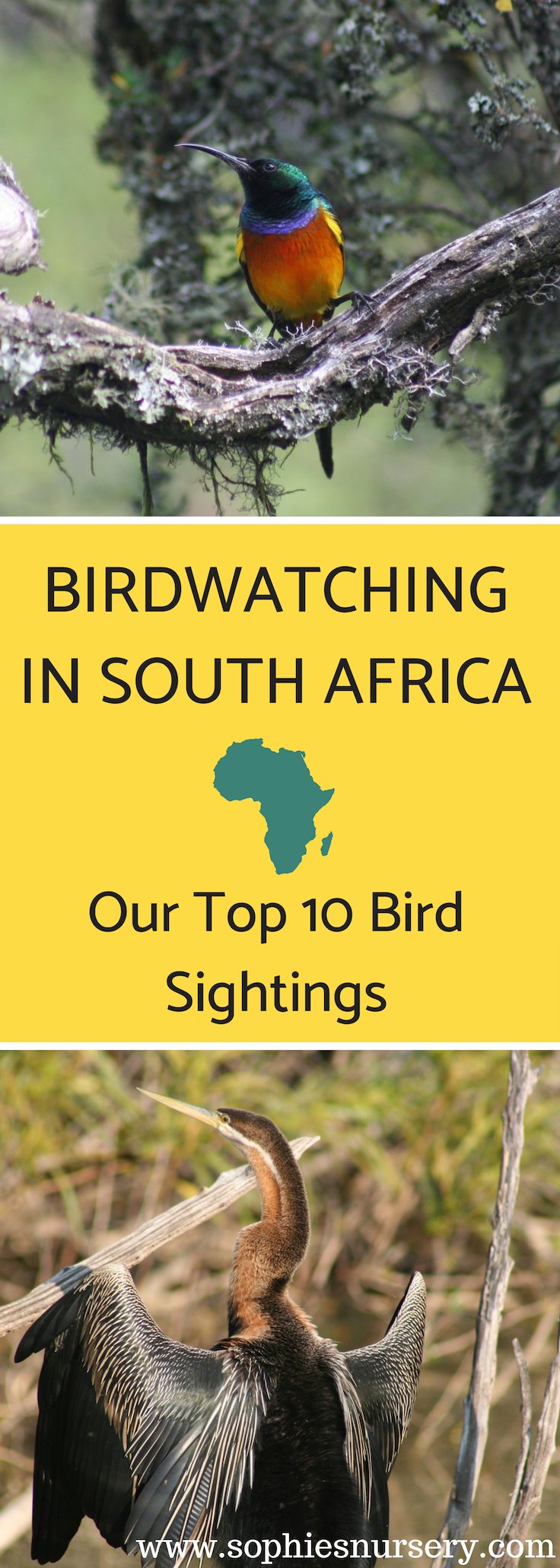 A birders paradise, #birdwatching in South Africa is not to be missed! We have narrowed down our Top 10 bird sightings from our Garden Route trip. What birds would you add to our list?  #SouthAfrica #travel #vacation #honeymoon #wildlife